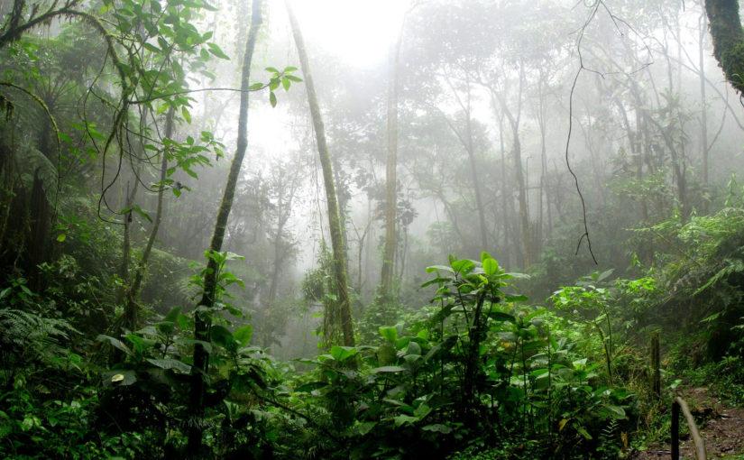 Maugli, a dzsungel fia (1994) ajánló és előzetes