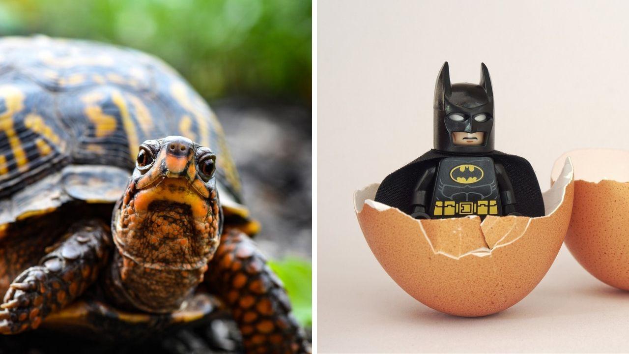 Batman vs. Teenage Mutant Ninja Turtles (2019) ajánló és előzetes