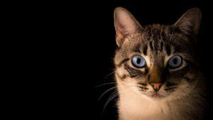 meglepett cica